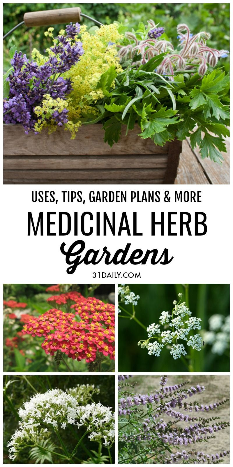 Medicinal Herb Gardens Series Gardening Vegetable And Kitchen