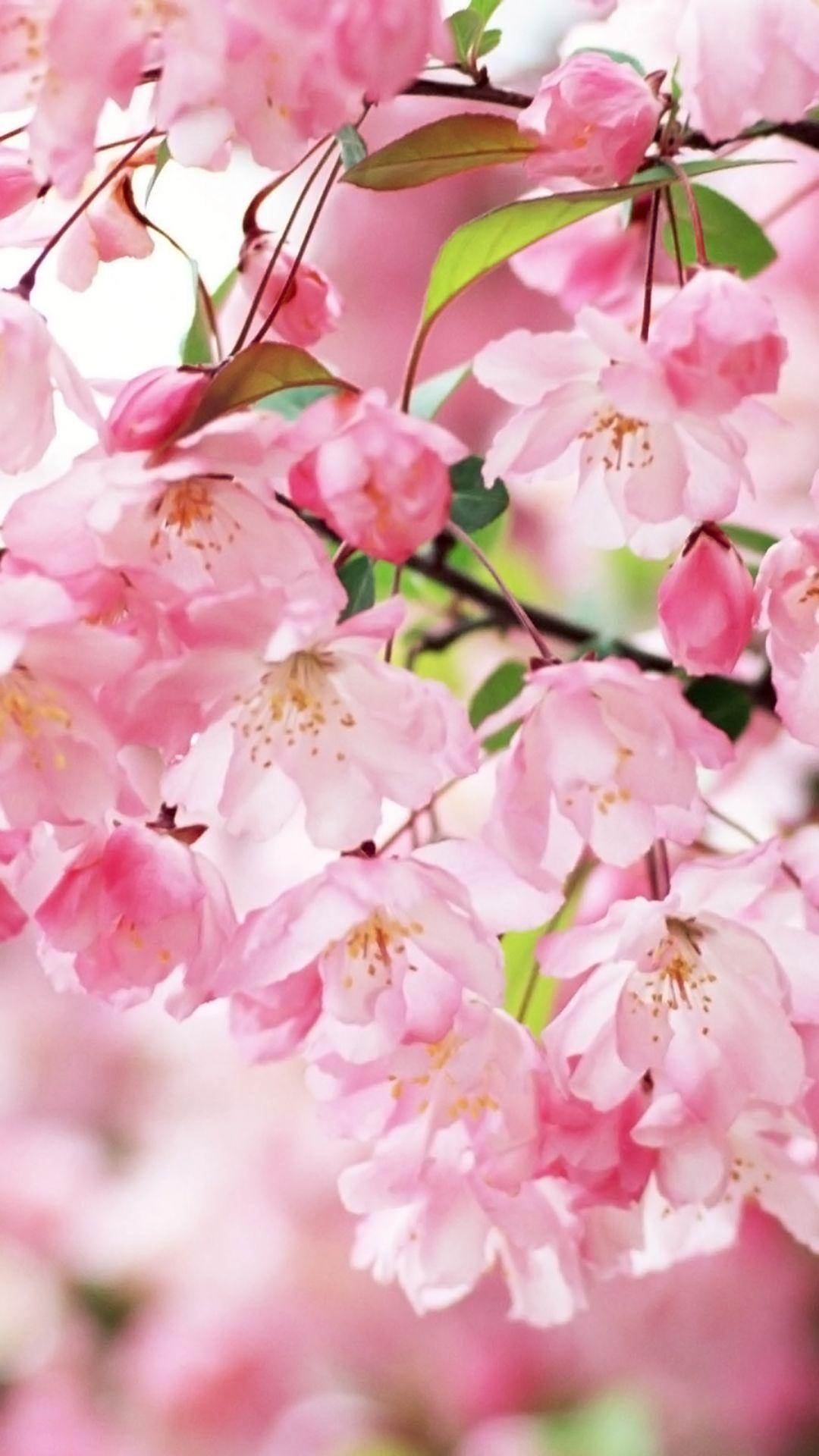 Desktop Wallpaper Flowers High Resolution The Photos Club High Resolution