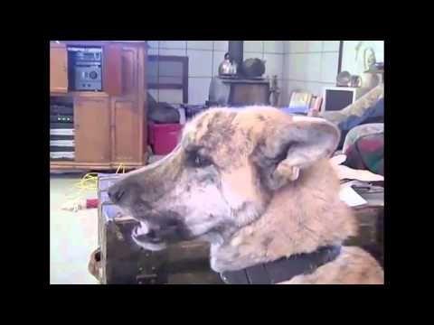 Ultimate Dog Tease Youtube Dog Crying Funny Talking Dog Cute