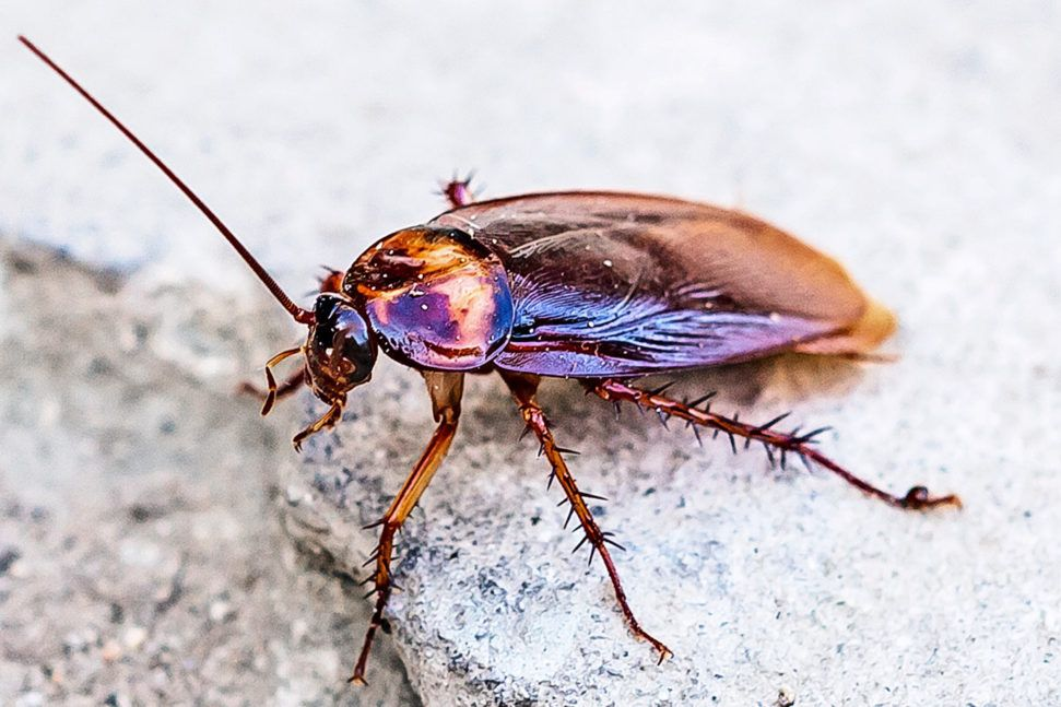 The way roaches run could teach robots a thing or two