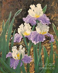 Iris Paintings - Iris  by Ruth Tucker Brown
