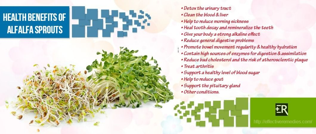 Do you know health benefits of alfalfa sprouts tea this