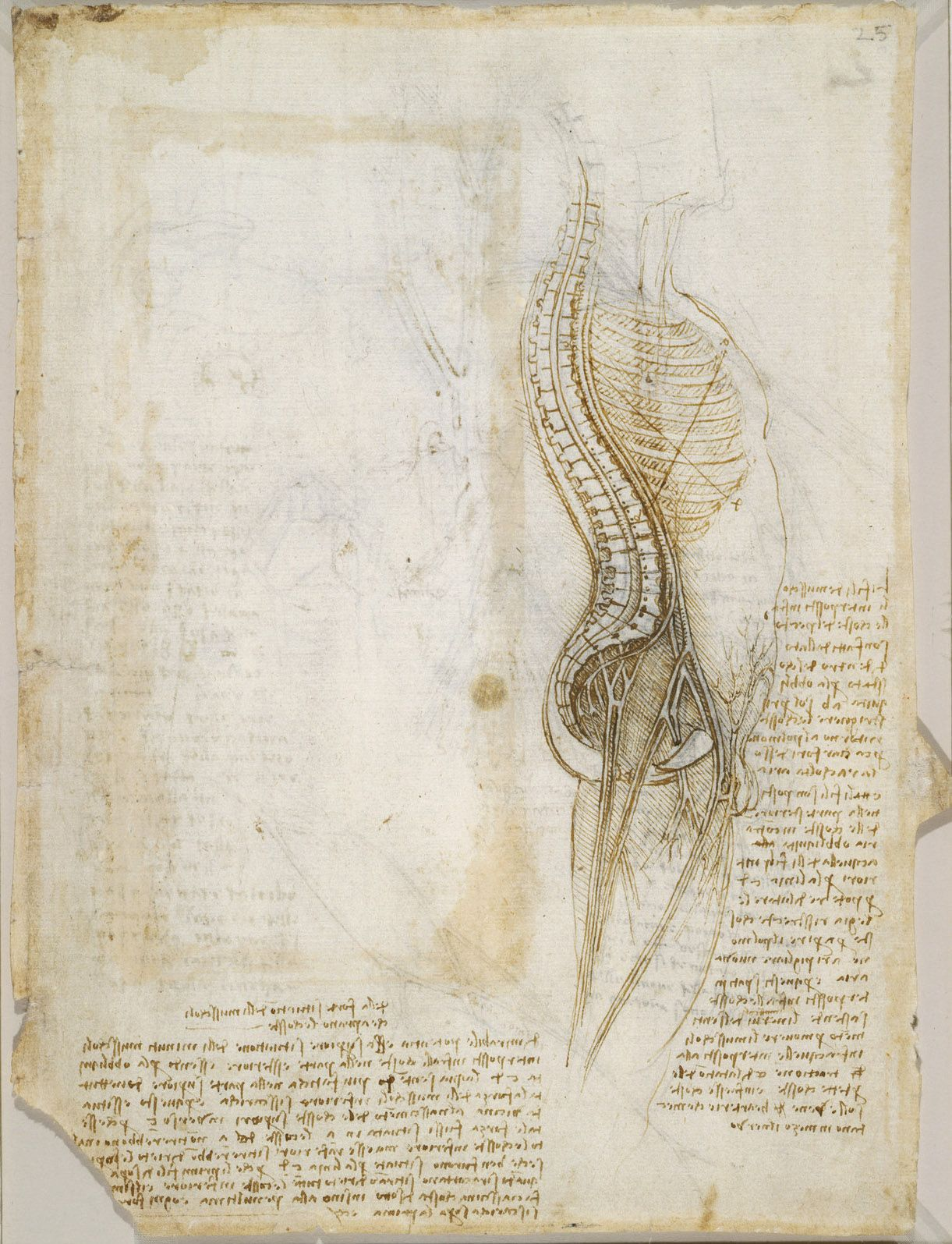 Recto: Diagram of the spine, nerves, vessels, etc., and notes on the ...