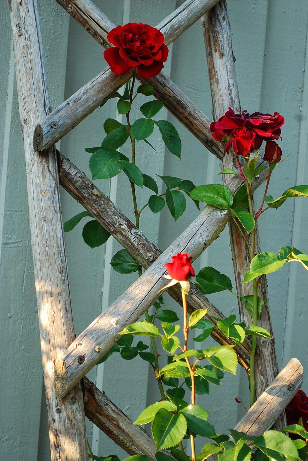 Rustic Wood Rose Trellis Garden Crafts Garden Yard 400 x 300