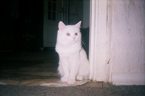 Cat pose...