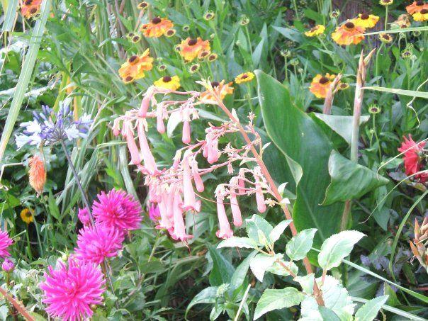Flower border in late summer