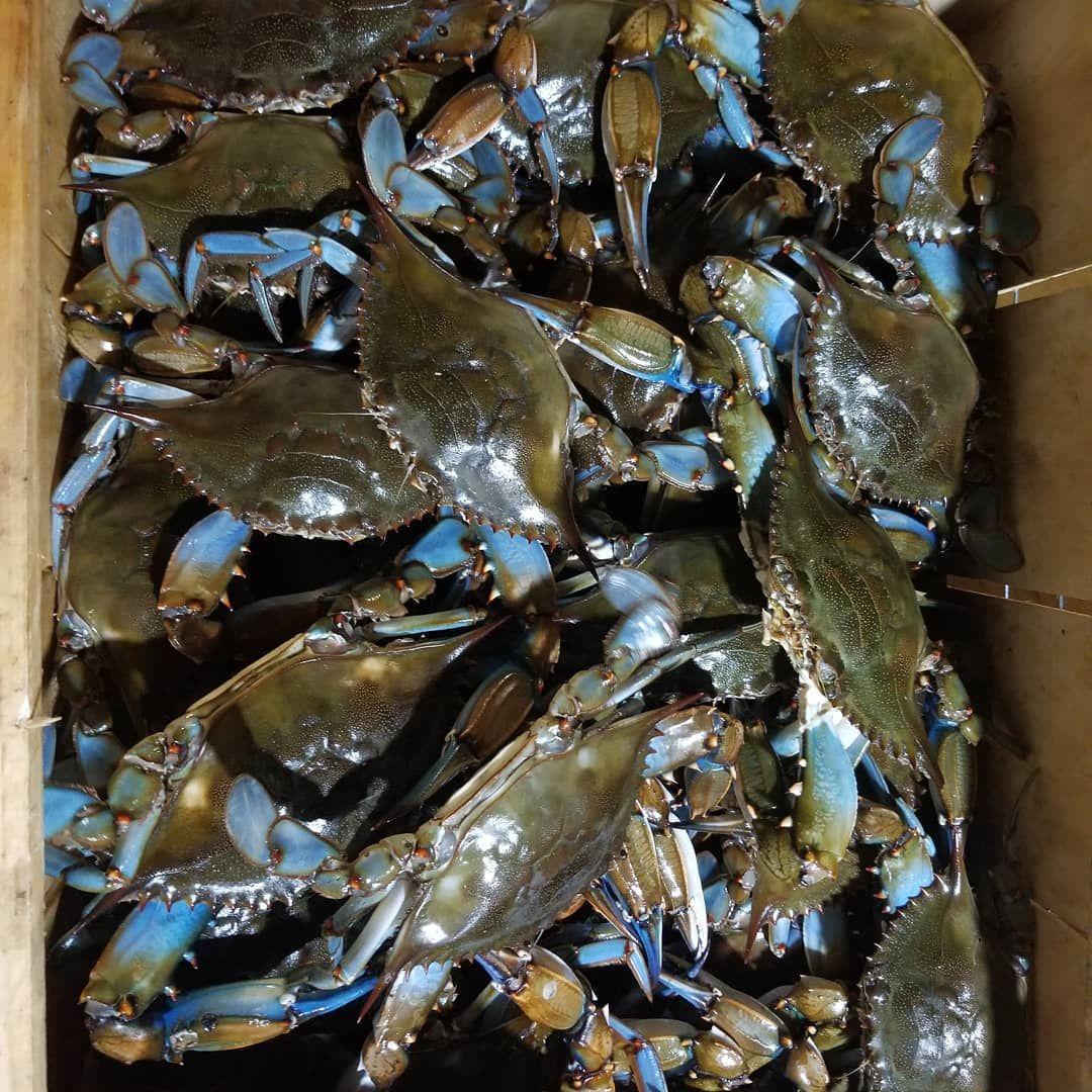 recipe: order live blue crabs online [22]