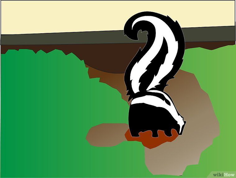 Get a Skunk to Leave | Skunk repellent, Getting rid of ...