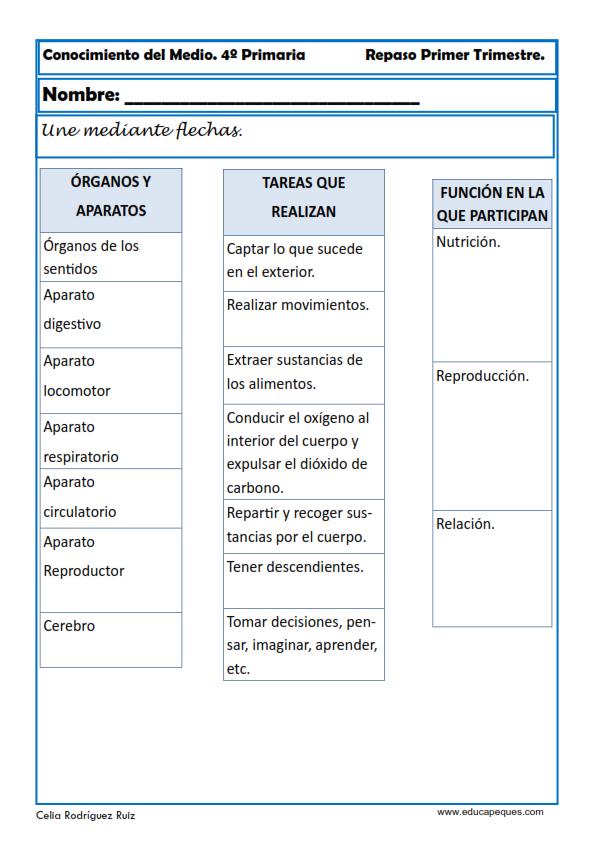Fichas Conocimiento del Medio Cuarto de Primaria | Organizadores ...