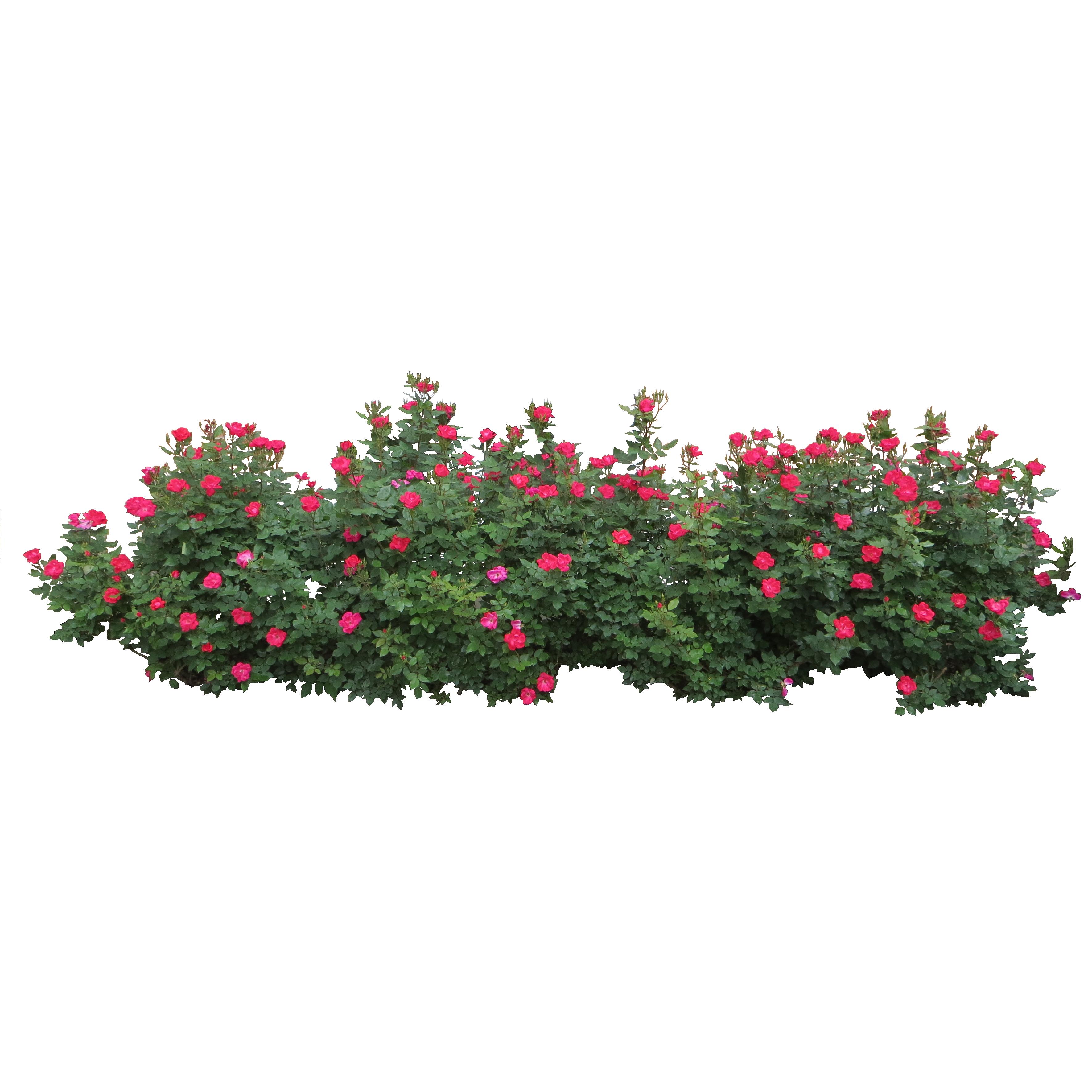 hedge brush Szukaj w Google (With images