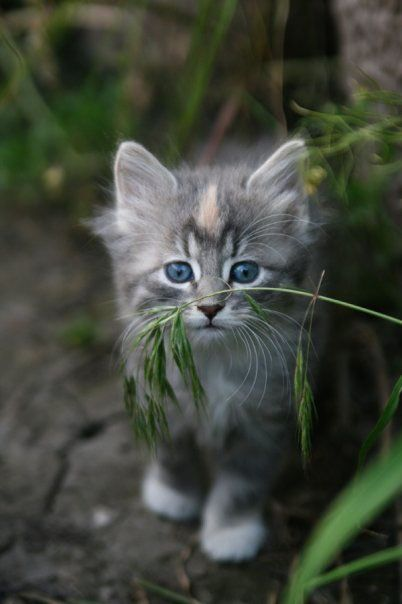 Sweet kitten - Photography by Melissa Peterson