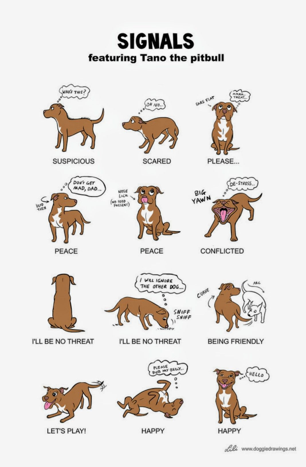 Dog Signals What Is Their Body Language Telling You