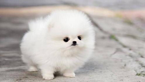 Cute Puppies Wallpaper Iphone Best Iphone Wallpaper Dog Wallpaper Iphone Puppy Wallpaper Puppy Wallpaper Iphone