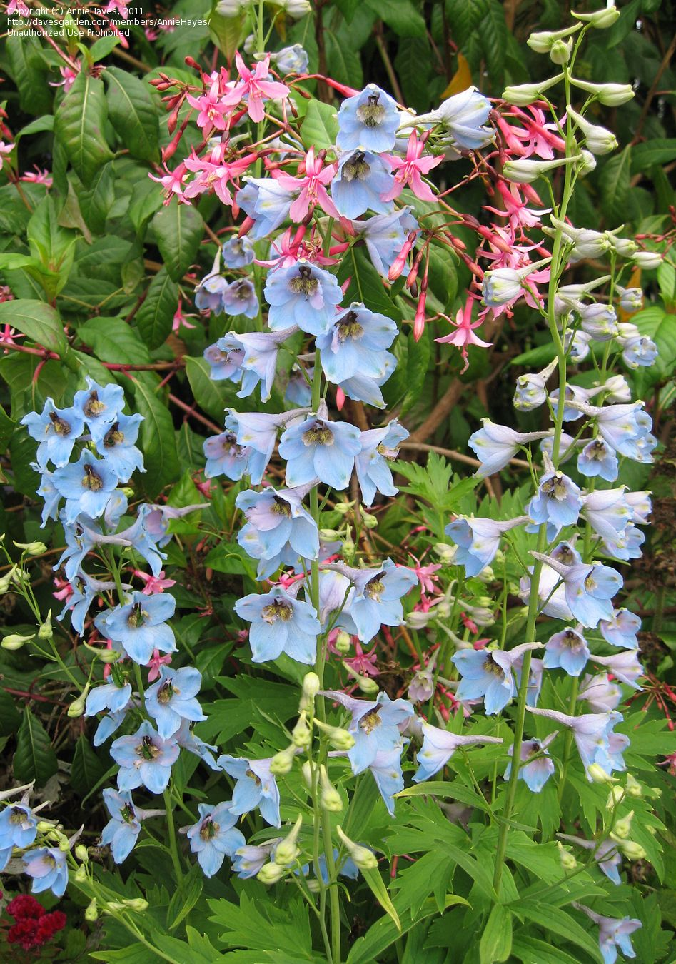 Pin On Verve Garden Plants