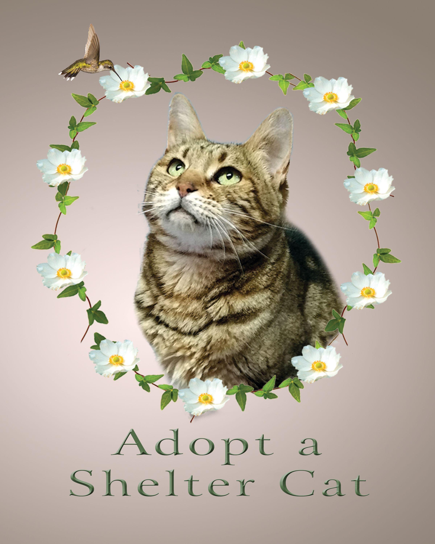Cat S Story Included Digital Download 3 Jpegs 5x7 8x10 11x14 Inch Rescue Cat Art Shelter Cat Art Cats Cat Art Cat Rescue