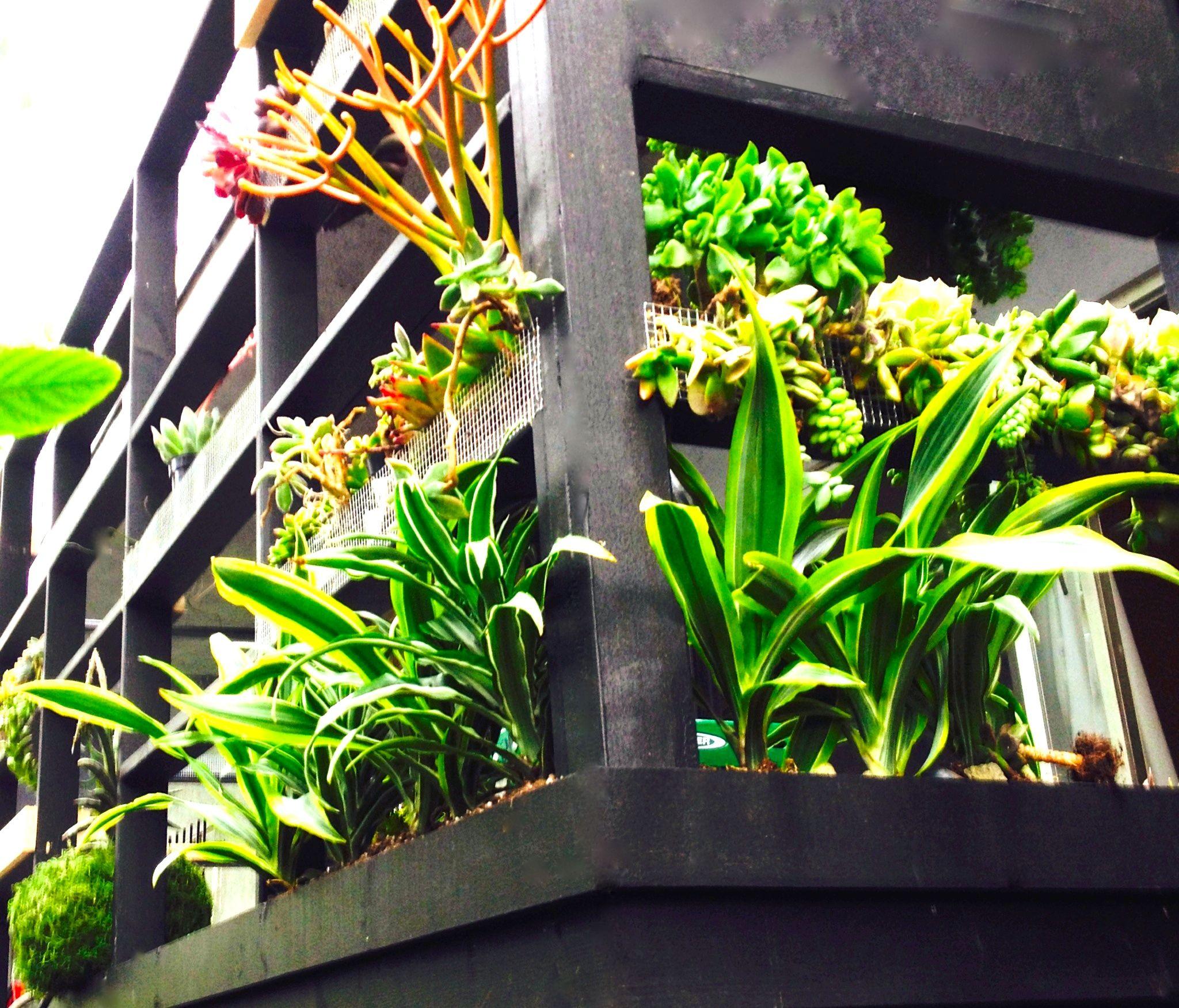 Vertical Garden Doubling As Privacy Green Screen For Balcony