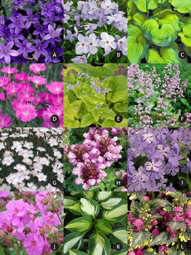 Under A Small Tree Garden (Garden Design and Plants) A lil\u0027 GARDEN