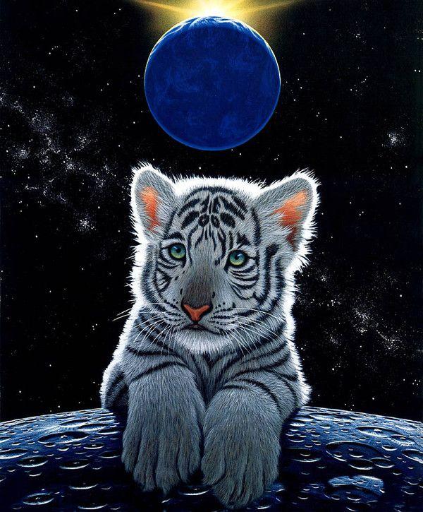William Schimmel Baby White Tiger Animals Tiger Art