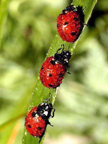 Pin en Рисунки бабочек
