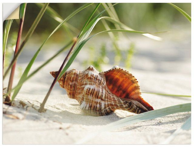 Photo of Buy Artland wall film »Tanja Riedel: Large shell on the beach« online OTTO
