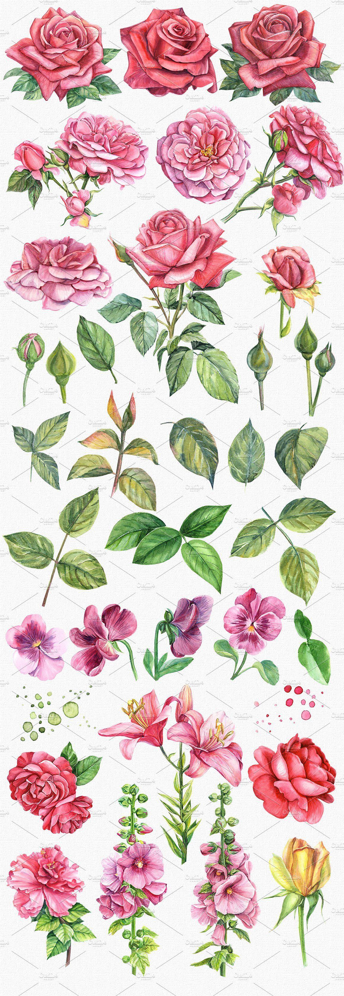 Set flowers roses, watercolor   Цветы, Розы, Раскраски