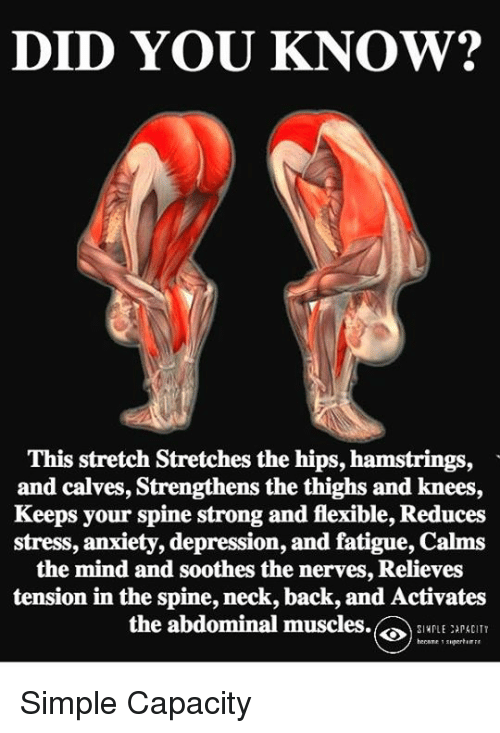 Memes, Anxiety, and Depression: DID YOU KNOW? This stretch Stretches ...