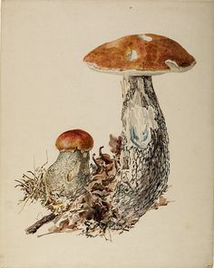 Image result for beatrix potter fungi