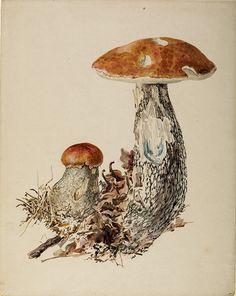 Image result for beatrix potter fungi
