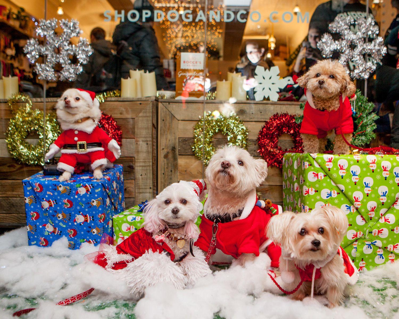Lookbook PuppyCon — DOG & CO. Dogs, Lookbook, Teddy bear