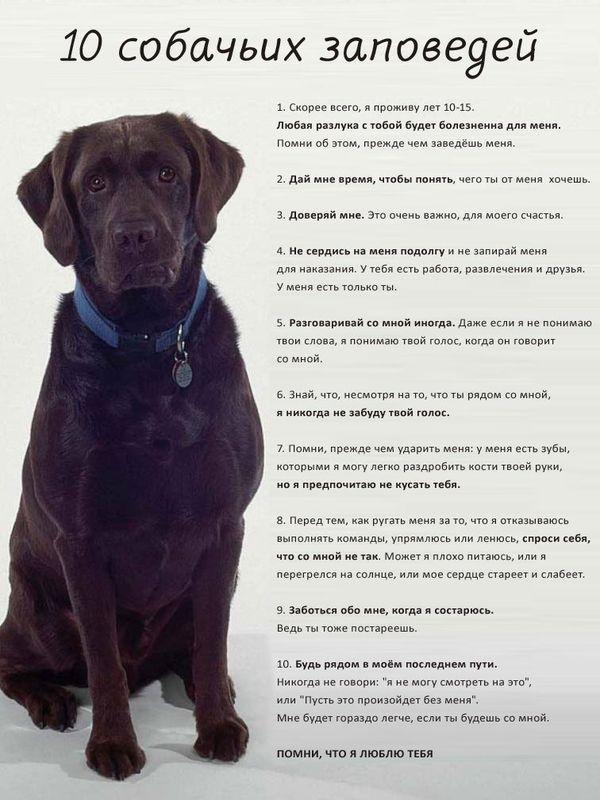 Советы начинающему собаководу (в картинках) - Страница 3 ...