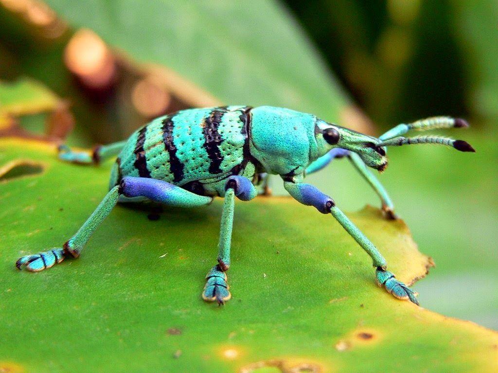 Los 9 insectos coloridos ms fascinantes galera