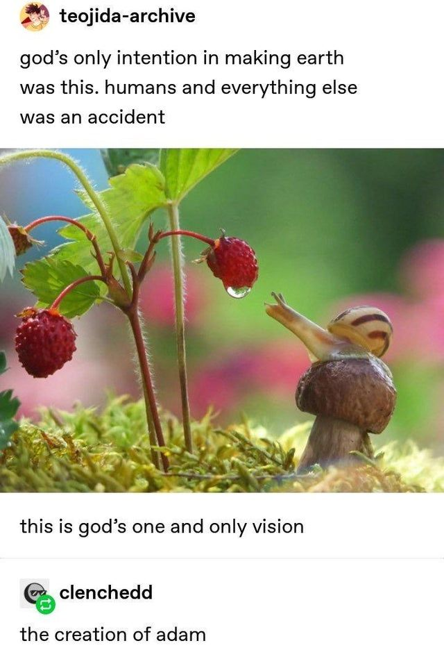 54 Top Tumblr Posts Tumblr Funny Tumblr Posts The Creation Of