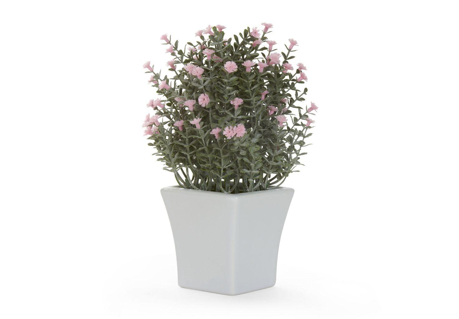 Arbusto De Flores Rosas En Maceta De Cerámica Blanca