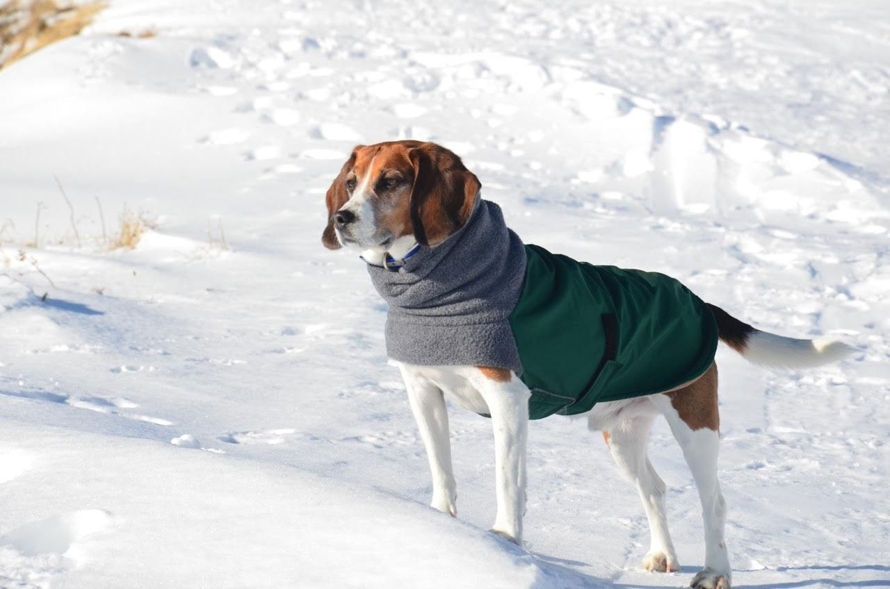 Pin On Beagle Apparel