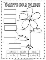free plant file 5 pages parts of a plant preschool science. Black Bedroom Furniture Sets. Home Design Ideas