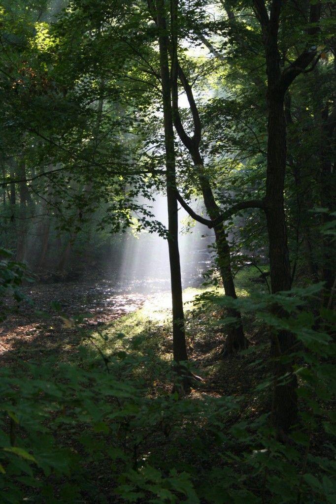 Morning Light @ Nishisakawick Creek along the Delaware River ...