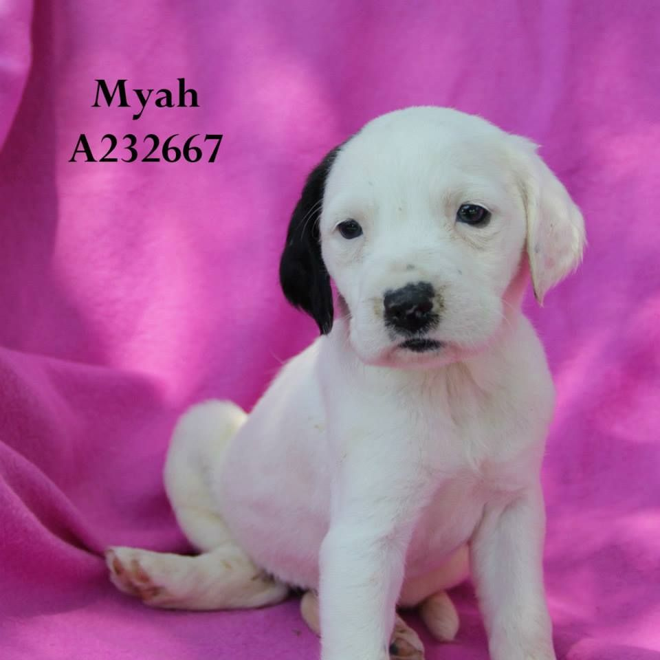 Conroe, TX ~~ Myah, ID: A232667 (Location: FOSTER HOME ...