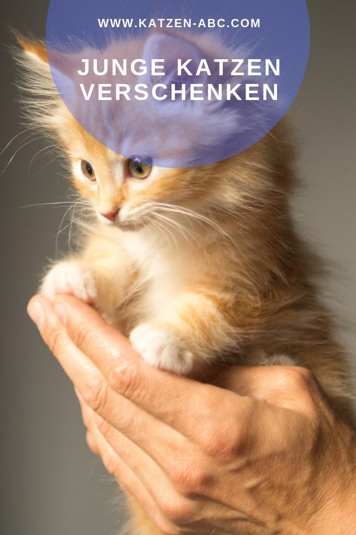 Junge Katzen Zu Verschenken Katze Zu Verschenken Junge Katzen Katzen