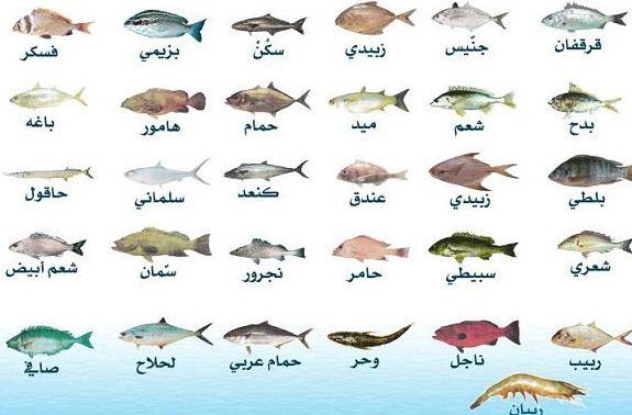منتديات ستار تايمز Types Of Fish Fish Pics