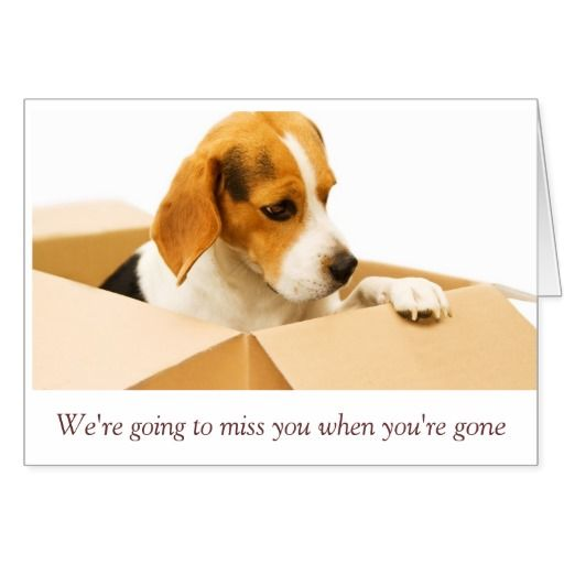 Sorry To See You Go Card Zazzle Com Moving Cross Country Pets Pet Parent