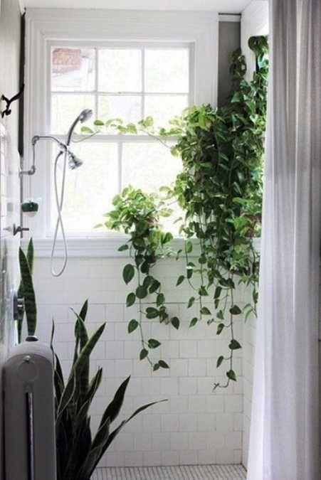 30 Green Ideas For Modern Bathroom Decorating With Plants Shower Plant Green Bathroom Bathroom Plants
