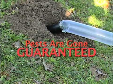 Gopher Control Proven To Be 90 Effective Garden Pests Moles In Yard Gopher Control