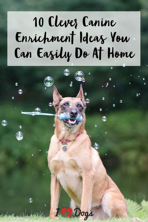 10 Clever Canine Enrichment Ideas You Can Easily Do At Home Dog