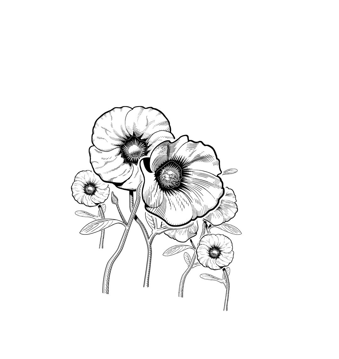 Desert Rose Illustrated By Glenn Lumsden Plant Tattoo Australian Wildflowers Mosaic Flowers