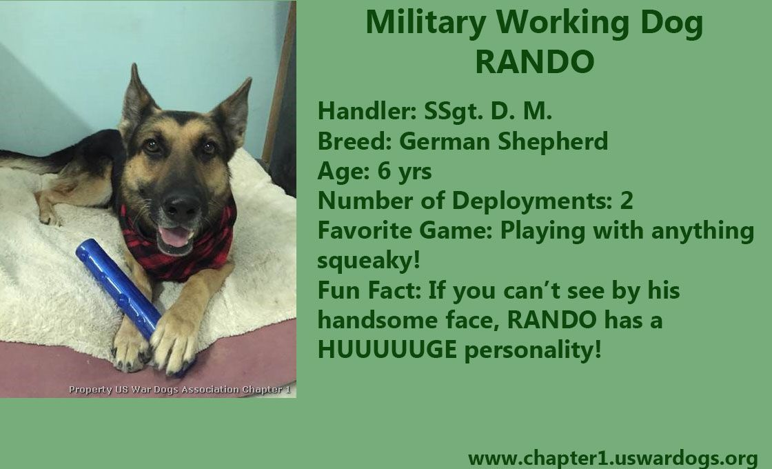 Merry Christmas From Military Working Dog Rando Who Is Keeping Our