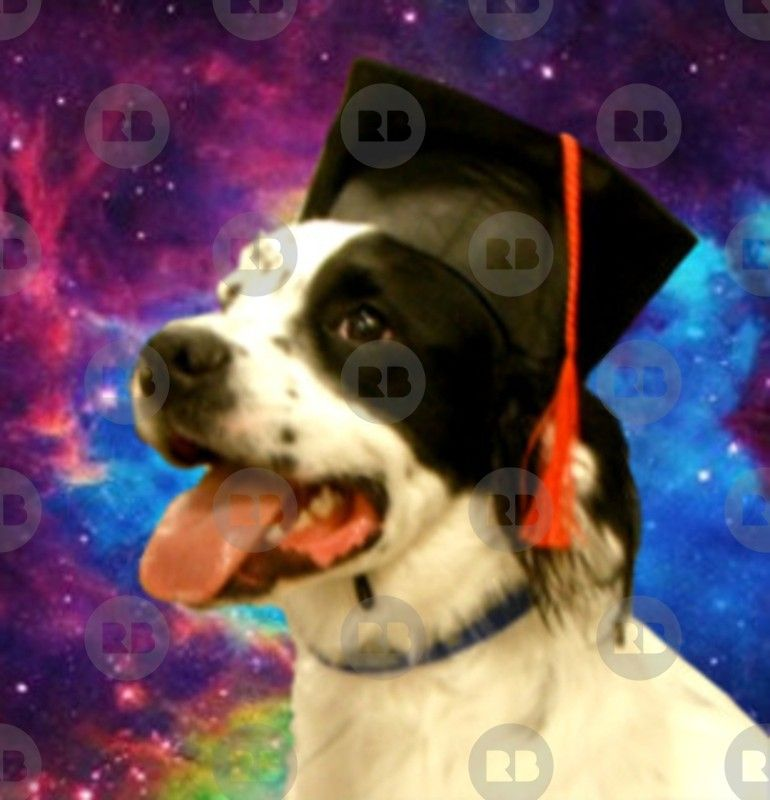 Who S A Good Boy This Smart Dog Has Graduated Black And White