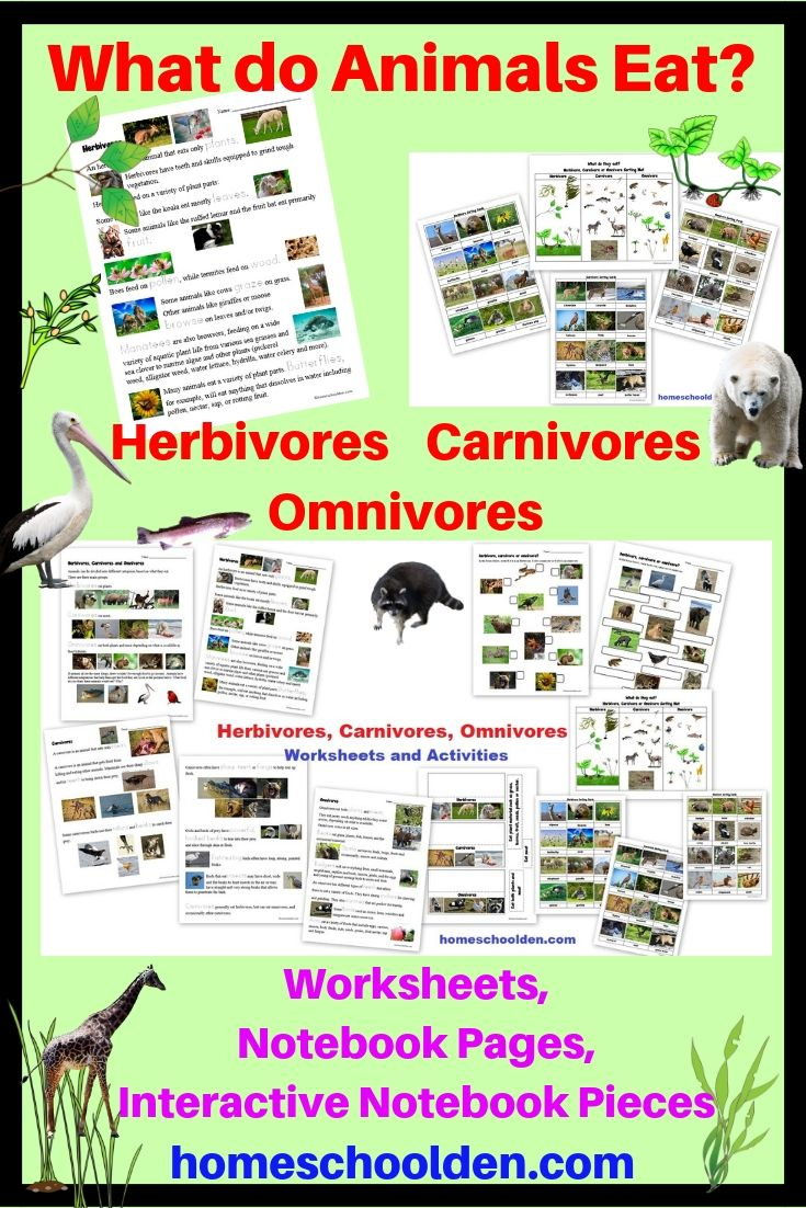 Herbivore Carnivore Omnivore Worksheets and Activities ...
