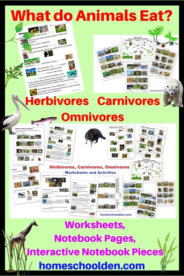 Herbivore Carnivore Omnivore Worksheets and Activities