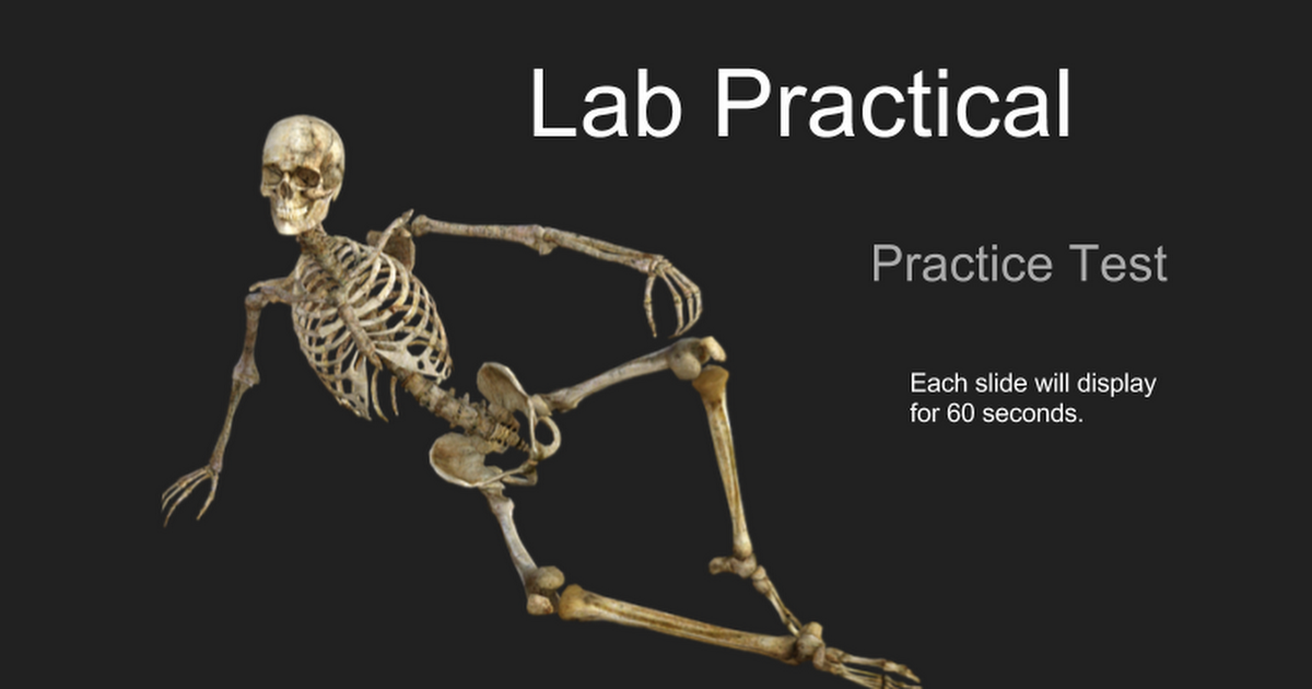 Lab Practical Practice Test Each Slide Will Display For 60 Seconds
