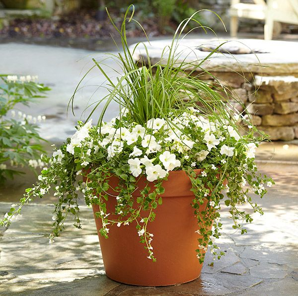 8 Stunning Container Gardening Ideas: All-White Moon Container GardenThis Monochromatic